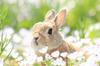 可愛い動物 1 うさぎ ブログ用.png